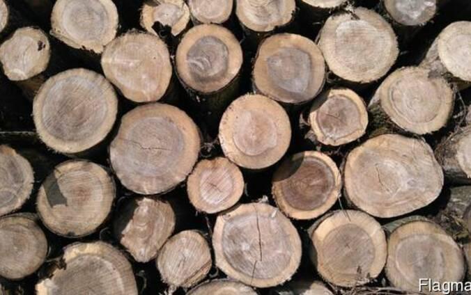 Продам дрова Дуб. Дубовые Рубленые или метровые.