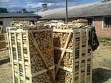 Продам дрова колоті на експорт (граб, ясен, дуб, береза) - фото 5