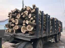 Продам дрова круглые