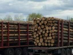 Продам дрова паливні соснові, довгомір
