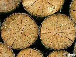 Продам дрова твердых пород в чурках