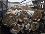 Продам дуб пиловочник 36 и больше 1-2 сорт - фото 3
