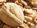 Продам фермерское хозяйство по выращиванию орехов. - фото 1