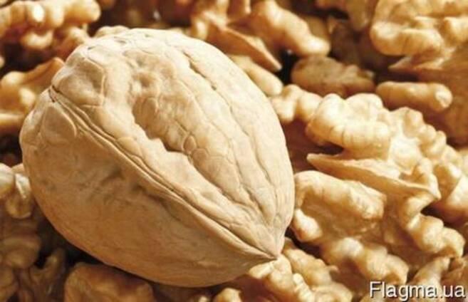 Продам фермерское хозяйство по выращиванию орехов.