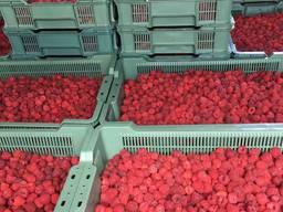 Продам готовий бізнес вирощування малини