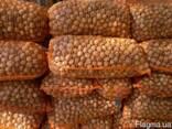 Продам Грецкий орех, семечка тыквы, квасолю - фото 1
