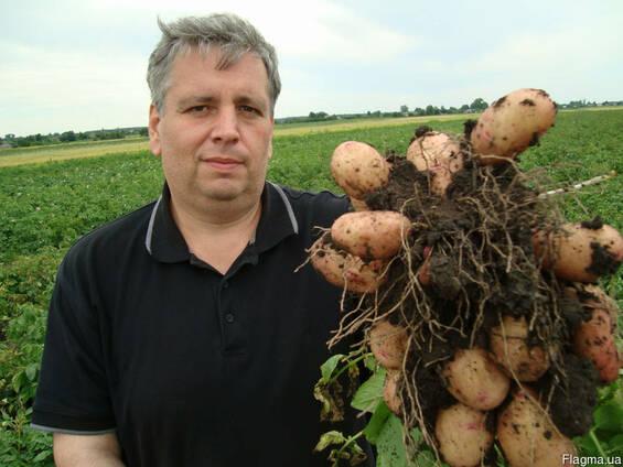 Продам картофель семенной ДО 20 Сортов постоянно в наличии