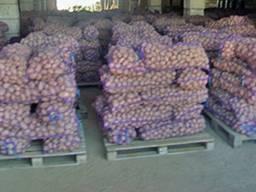 Продам картофель все сорта