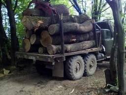 Продам кругляк хвойний,дуб,ясень,дрова,пиломатериали.