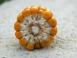 Продам кукурудзу 400 т