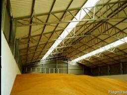 Продам кукурузу на экспорт 145$. - фото 1