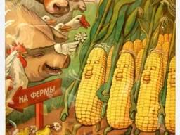 Продам кукурузу на условиях FOB
