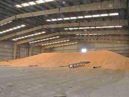 Продам кукурузу оптом на експорт