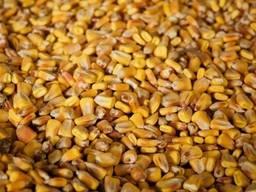 Продам кукурузу в мешках по 45 кг, Доставка/Самовывоз