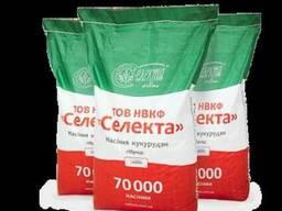 Продам, Купить семена кукурузы Полтава ФАО 270