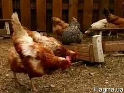 Продам куриный помет в мешках