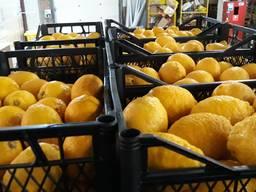 Продам лимон оптом помощь в доставке по регионам