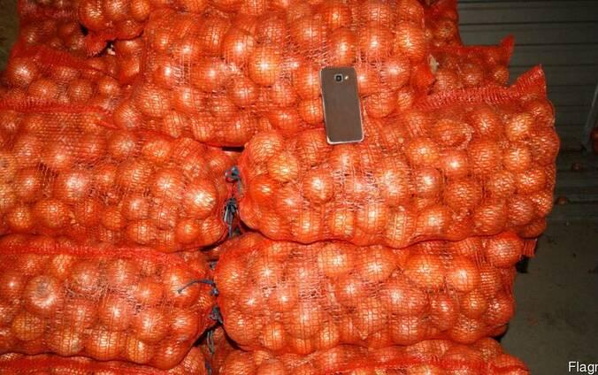 Продам лук экспортного образца