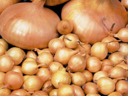 Продам лук-севок на выганку пера фракц. 3-5см. 12грн/кг