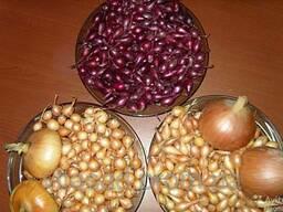 Продам лук севок(тыканка) любая фракция в наличии 25грн