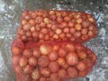 Продам лук сорт берекет