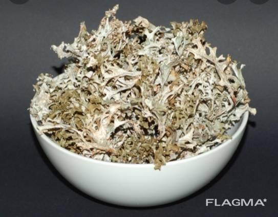 Продам мох ісландський