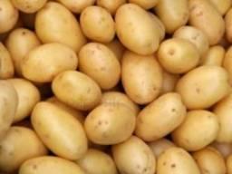 Продам молодую картошку, товарный картофель