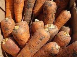 Продам морковь 2 сорта