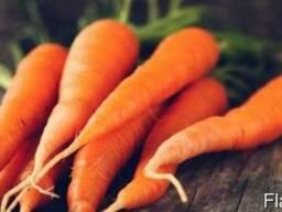Продам морковь второго сорта. Цена низкая