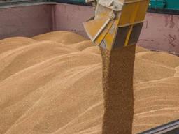 Продам на экспорт пшеницу 1-2-3 класс