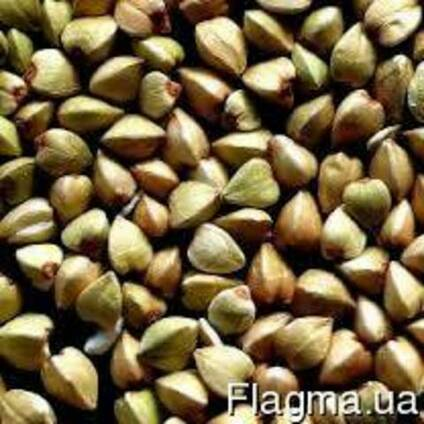 Продам насіння гречки, сорт Гранбі( Канада), Цена35, Харьков
