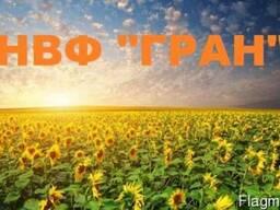 Продам насіння соняшника (під гранстар) Барса,Толедо, Нео