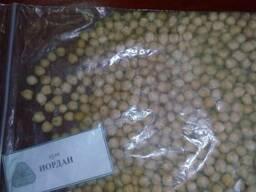 Продам нут посевной сорт Иордан