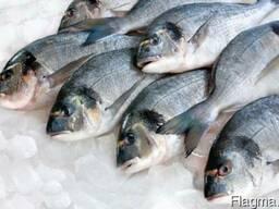 Продам охлажденную рыбу оптом и в розницу.