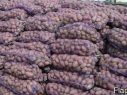 Продам оптом крупный картофель