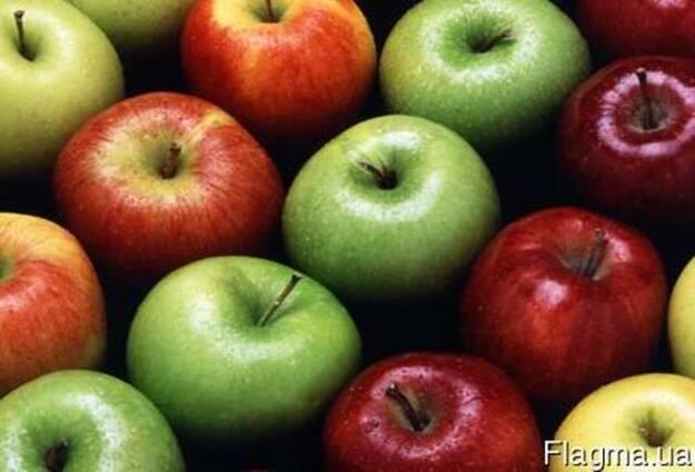 Продам оптом яблоки разных сортов высшего качества