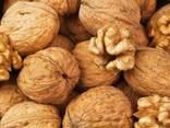 Продам орех на бой - фото 1