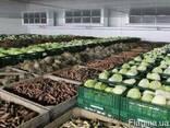 Продам овощі борщевого набора