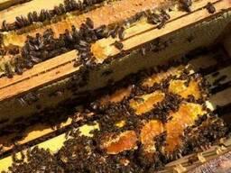 Продам пчелопакеты украинской степной породи Бджолопакети