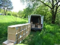 Продам пчелосемьи, пчелопакеты, рамки , ульи, карпатка 2019