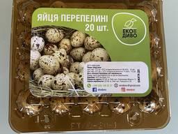 Продам перепелиные яйца оптом и крупным оптом