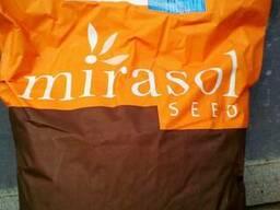 Продам подсолнух компании Mirasol(Сирокко)