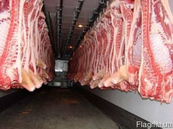 Продам Полутуши свиные, говяжи, кони