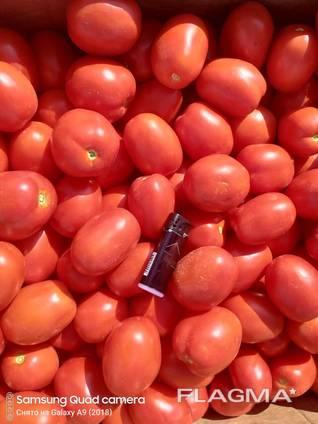 Продам помидор, сорта сливка и кругляк, обьёмами, фермер.