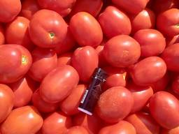 Продам помидор, сорта сливка и кругляк, обьёмами, фермер. - фото 1