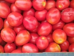 Продам помидор, сорта сливка и кругляк, обьёмами, фермер. - фото 4