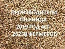 Продам пшеницу. Справочник 2019 4СГ(26258 фирм)