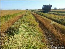 Продам Рисовое хозяйство в одесской обл