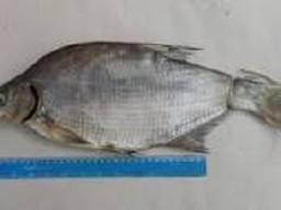 Продам рыбу - фото 2