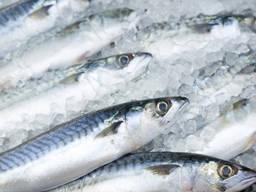 Продам рыбу с/м